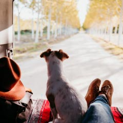 Dog-friendly campervan hire & motorhome hire